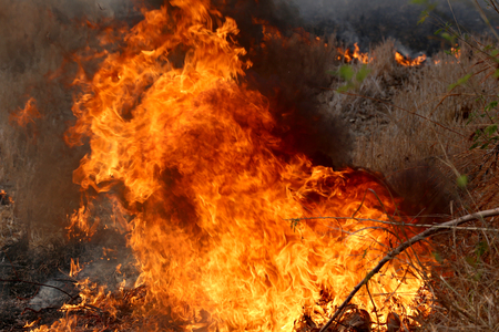 khon: Summer wildfires burning in the Forest at rural area of Khon Kaen,Thailand due to the very hot weather.
