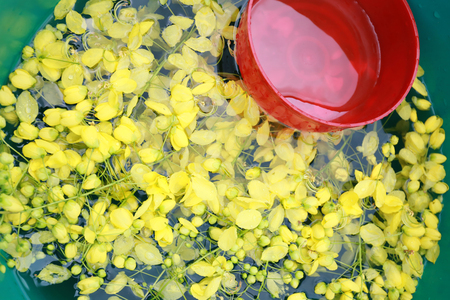 fistula: cassia fistula in water and have red water bowl for Songkran Festival in Thailand. Stock Photo