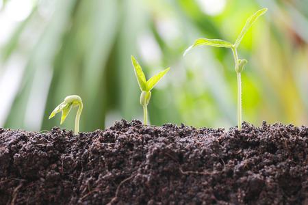 野菜の土の緑豆もやしは庭し、自然成長と農業の概念の背景のボケ味があります。