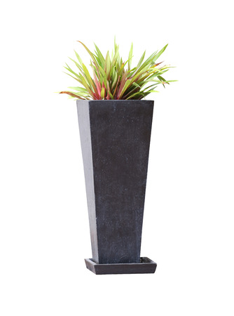 Potted tree Modern style isolated on white background and have clipping paths.