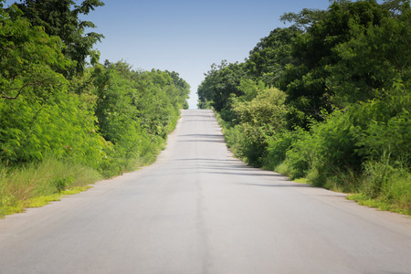 Rural road with trees on both sides during the daytime.