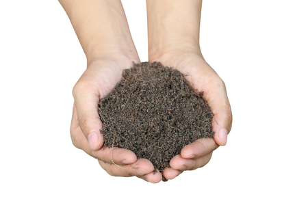 turba: Soil in hand isolated on white background and have clipping paths for design in your work.