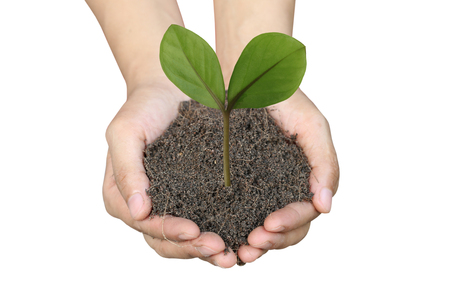 Soil in hand and green Leaves isolated on white background for design in your work.