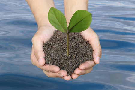 Green tree on the ground in men hands and water background in concept of natural preservation. Stock Photo