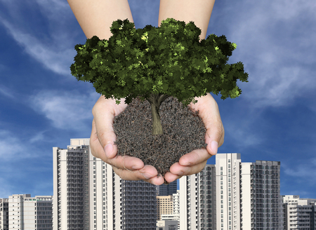 forestation: Green tree on the ground in men hands,Skyscrapers and city background in concept of natural preservation.