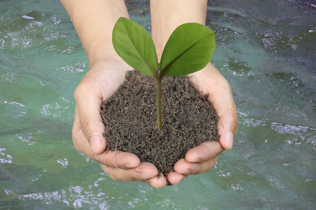 forestation: Green tree on the ground in men hands and water background in concept of natural preservation. Stock Photo