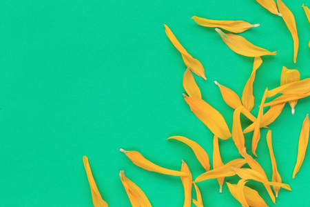 Petals of sunflowers on the background of green paper and have copy space for your design.