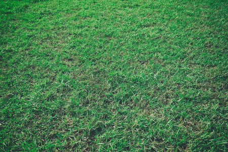 Green lawns empty backdrop for design nature background in your work,Green grass texture.