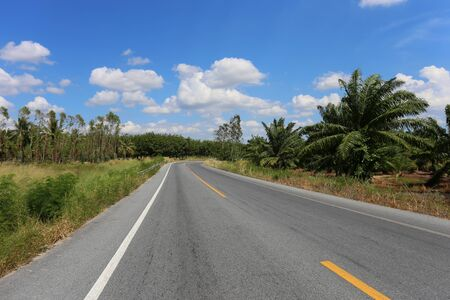 Rural road with trees on both sides during the daytime in blue sky.