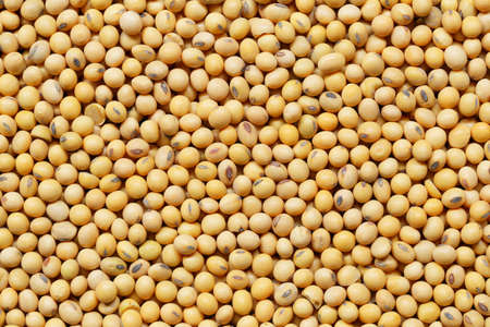 Fresh seed soybean for design background in your work.