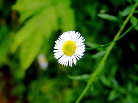 tiny: Tiny Flower
