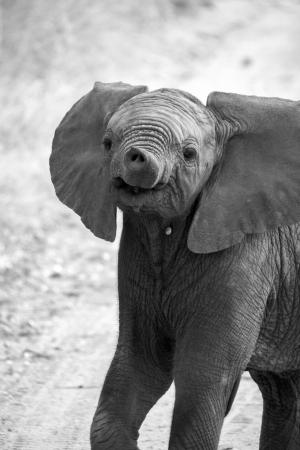 showoff: Baby elephant  Stock Photo