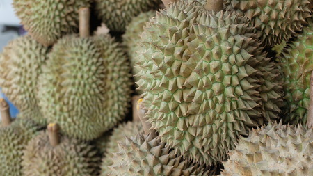 malvales: Durian thorn