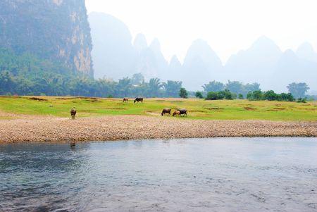 Water buffalo along Li river bank, Guilin, China, Banco de Imagens