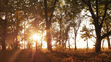 Autumn deciduous forest at dawn or sunrise, the video on the move