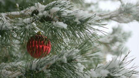 Red Christmas decorations with pine branches with copy space Stockfoto