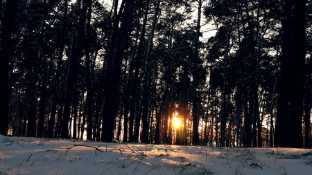 Sunset in the wood between the trees strains in winter period Stockfoto