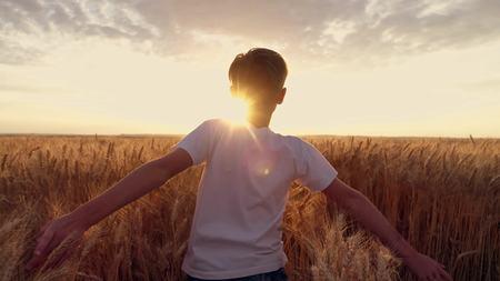 Little girl running cross the wheat field at sunset.Slow motion Stockfoto
