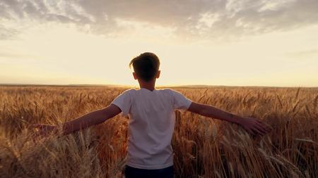 Little boy runs cross the wheat field at sunset. Slow motion, high speed camera