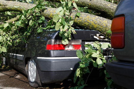 strong wind: Big tree fall down on car during hurricane. Insurance problem, bad luck, car parking concept Stock Photo
