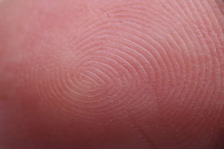 Unique human fingerprints on skin of hand in curl shape close-up. Personality identification concept 版權商用圖片
