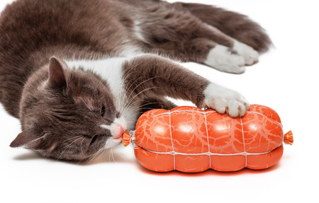 prying: Hungry cat biting sausage over white background Stock Photo