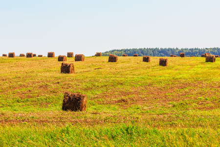 hayroll: Hay bales on field in summer day