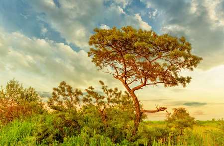 Sea buckthorn tree among bushes and grass in summer evening