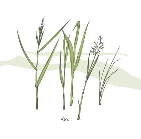 Grass blades Stock Vector - 7699022