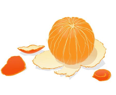 Peeled orange on white background Illustration
