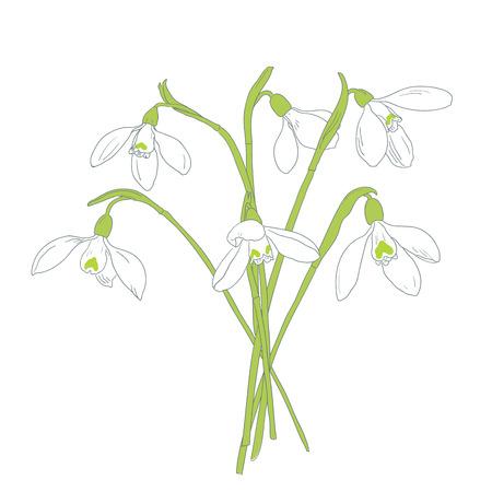 Snowdrops spring bouquet. Hand-drawn vector illustration Illustration