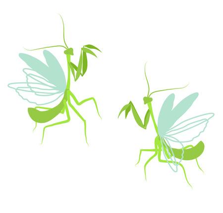mantis: Praying mantis. Flat drawing illustration of insect on white background Illustration