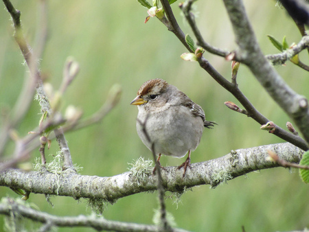 Small bird standing on a branch in springtime