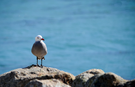 Seabird  on a rock with blue ocean background