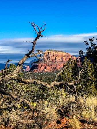 Red rocks of Sedona and Chapel of the Holy Cross framed by a branch