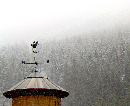 Weather vane with a donkey wearing skis with snow falling