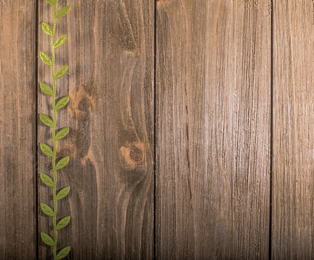 Green leaf vine forming a border on wooden background