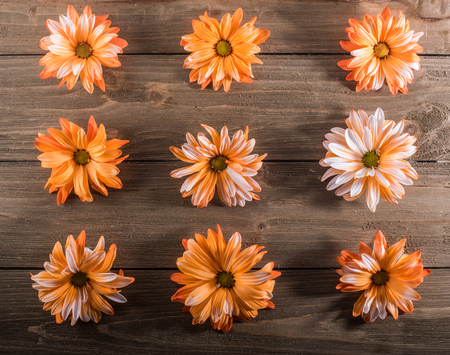 Nine Orange Flowers in Grid on wooden background Zdjęcie Seryjne