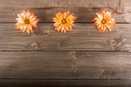 Three orange flowers on wood background with space