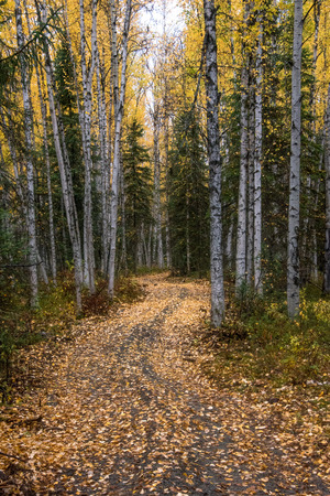 Leaf covered path curving through fall forest