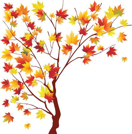 Autumn maple on white background. Vector illustration Illustration