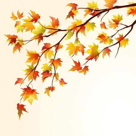 Autumn maple tree branche on bright background. EPS10
