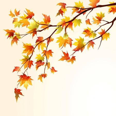 Herfst esdoorn boom branche op een lichte achtergrond. EPS10 Vector Illustratie