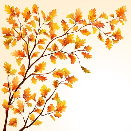 Autumn oak tree branche on bright background. EPS10 Vector