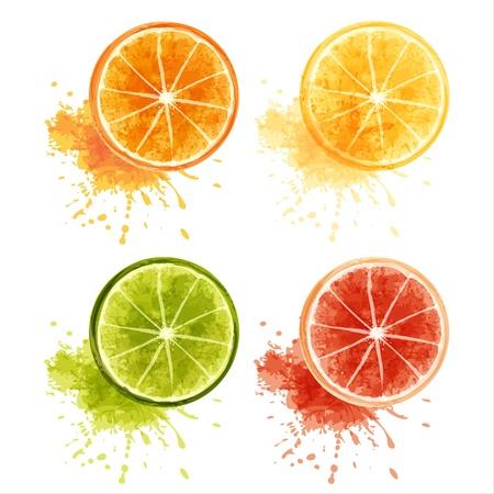 펄프: 잘 익은 감귤 류의 과일 세트 - 오렌지, 레몬, 라임, 자몽 EPS10
