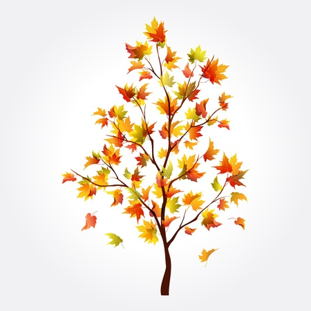 falling leaves: Beautiful autumn maple tree for design