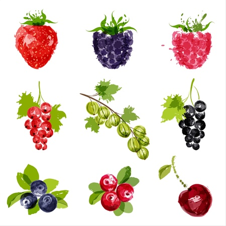 raspberry: juicy ripe berries-1   Illustration