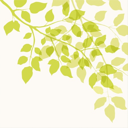 Branch with green leaves  Floral background