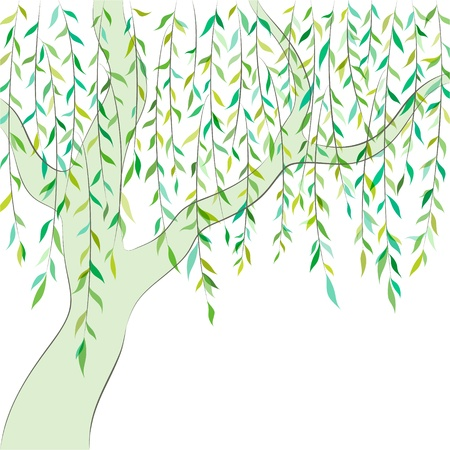 leafage: Willow tree  Graphic design  background