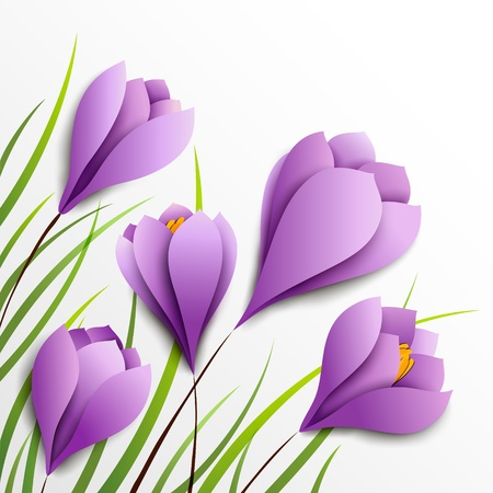 Crocuses  Five paper purple flowers on white background